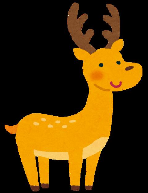 animal_deer